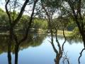 Country Lake 06