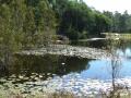 Country Lake 10
