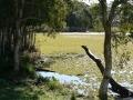 Country Lake 17