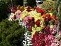 Flower Festival 03