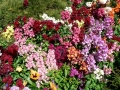 Flower Festival 04