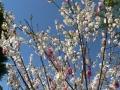 Flower Festival 06