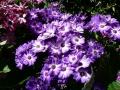 Flower Festival 09