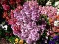 Flower Festival 18