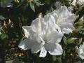 Flower Festival 20