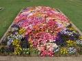 Flower Festival 25