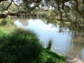 Quiet Waters12