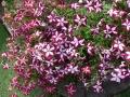 Spring Flowers 04