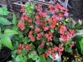 Spring Flowers 05