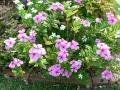 Spring Flowers 06