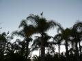 Sunrise & Sunset 14