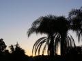 Sunrise Splendor02