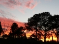 Sunrise Splendor15