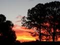 Sunrise Splendor16